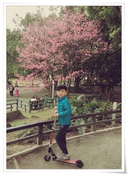 2015臺北燈節_台北市「喜咩」小提燈&賞櫻@中正紀念堂5