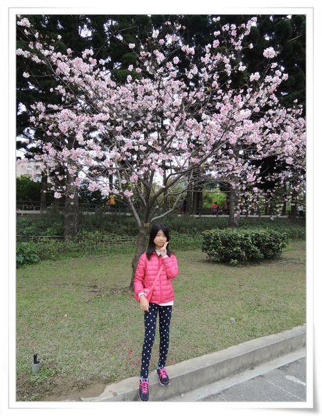 2015臺北燈節_台北市「喜咩」小提燈&賞櫻@中正紀念堂6