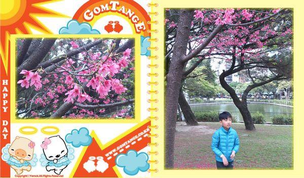 青年公園IV[台北萬華]4
