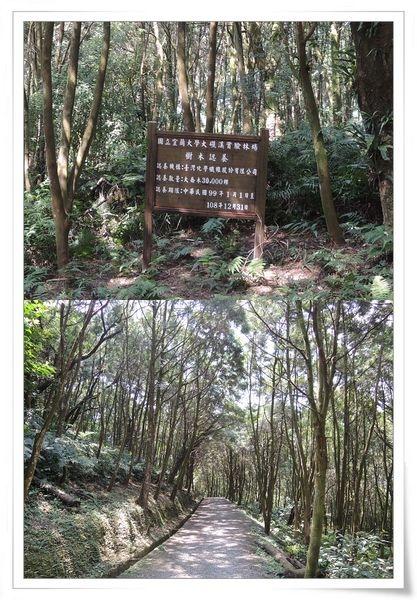 宜蘭大學延文實驗林場(大礁溪林場)19