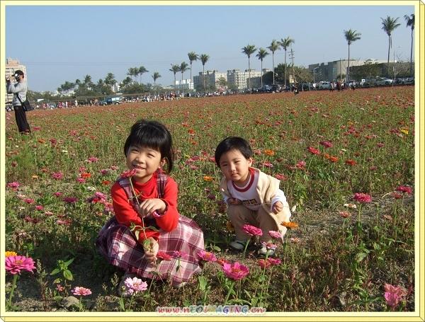 波斯菊花海[台南台糖生產路上]5.jpg