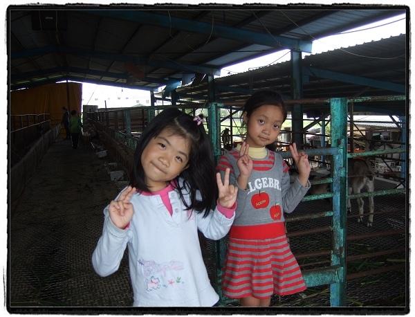 宜農牧羊場5.jpg
