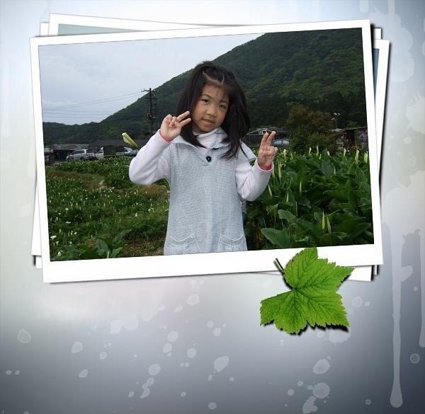2009竹子湖海芋季.jpg