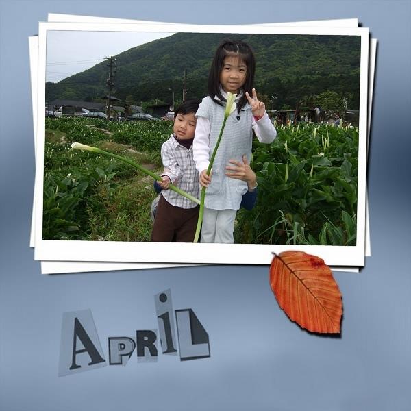 2009竹子湖海芋季1.jpg