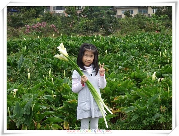 2009竹子湖海芋季4.jpg