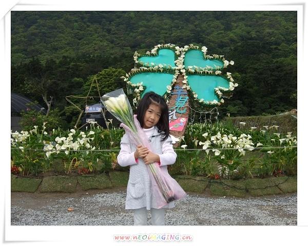 2009竹子湖海芋季7.jpg