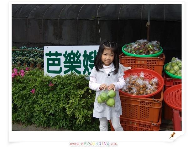 2009竹子湖海芋季10.jpg