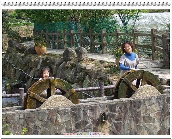 2009竹子湖海芋季17.jpg