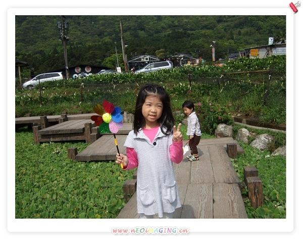 2009竹子湖海芋季18.jpg