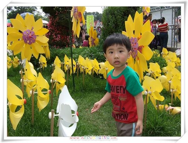 2009客家桐花祭1.jpg