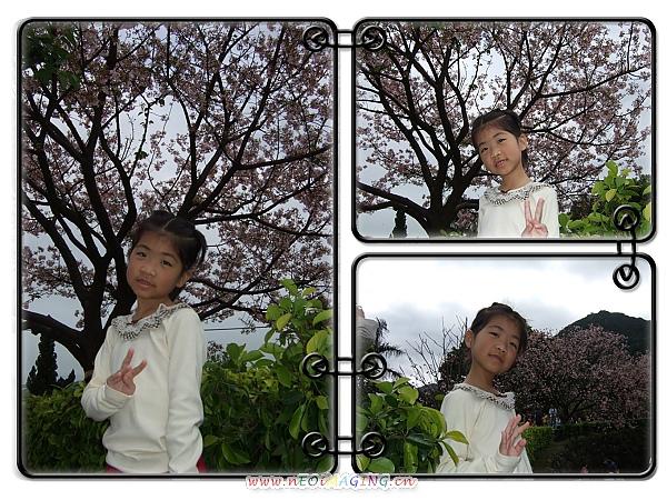 2010淡水天元宮賞櫻花2.jpg