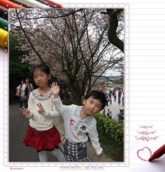 2010淡水天元宮賞櫻花5.jpg