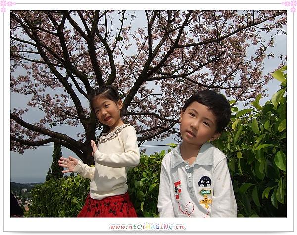 2010淡水天元宮賞櫻花7.jpg