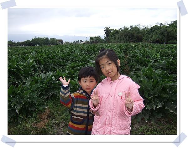 五結海芋1.jpg