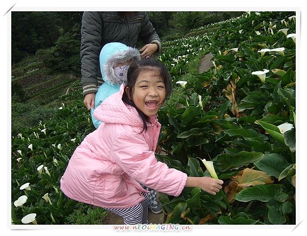 2010竹子湖海芋季4.jpg