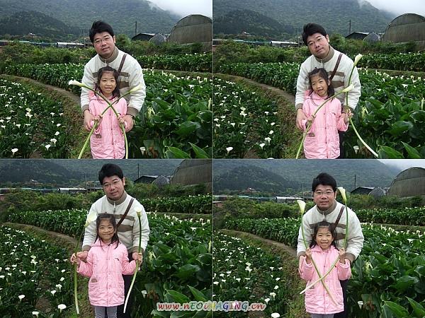 2010竹子湖海芋季8.jpg