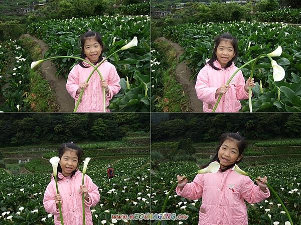 2010竹子湖海芋季10.jpg