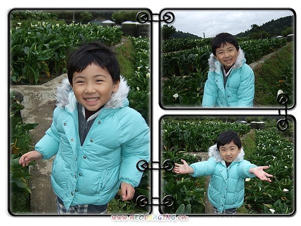 2010竹子湖海芋季11.jpg