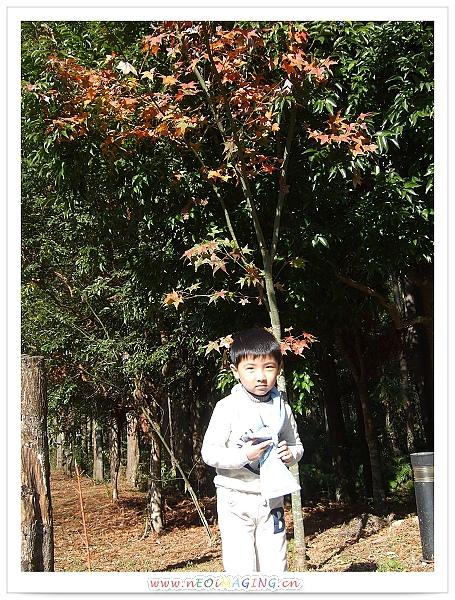 奧萬大國家森林遊樂區[Day 2]10.jpg