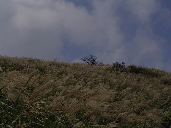 20061015爬爬團大屯山連峰行 026.jpg