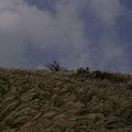 20061015爬爬團大屯山連峰行 027.jpg