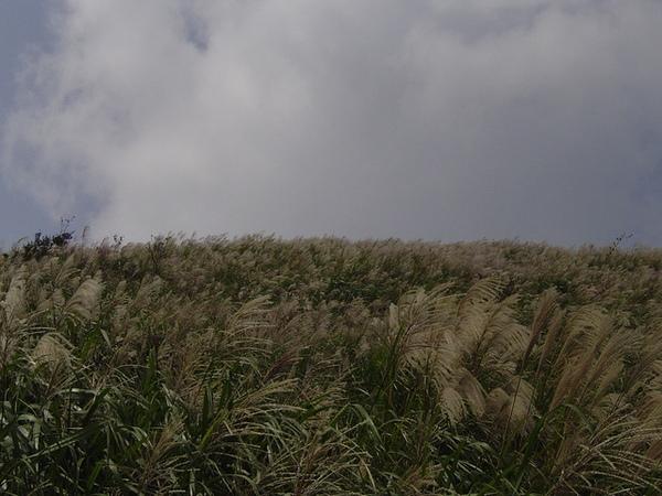 20061015爬爬團大屯山連峰行 028.jpg