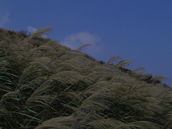 20061015爬爬團大屯山連峰行 029.jpg