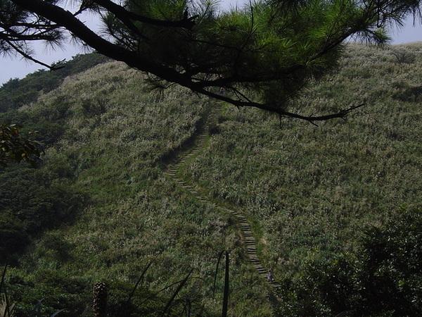 20061015爬爬團大屯山連峰行 044.jpg