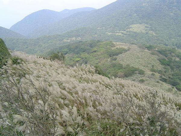 20061015爬爬團大屯山連峰行 061.jpg