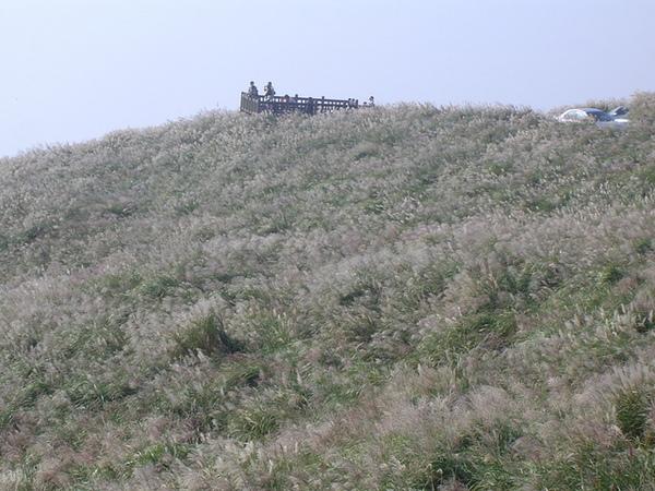 20061015爬爬團大屯山連峰行 080.jpg