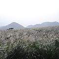 20061015爬爬團大屯山連峰行 085.jpg