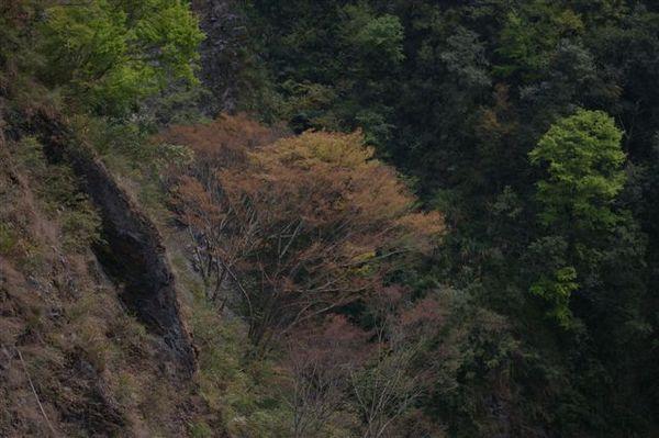 20070323~24八通關行 090.jpg