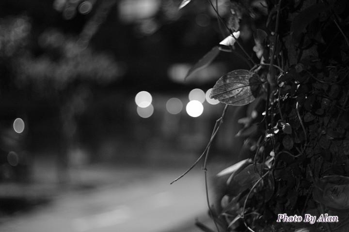 PhotoCap_006
