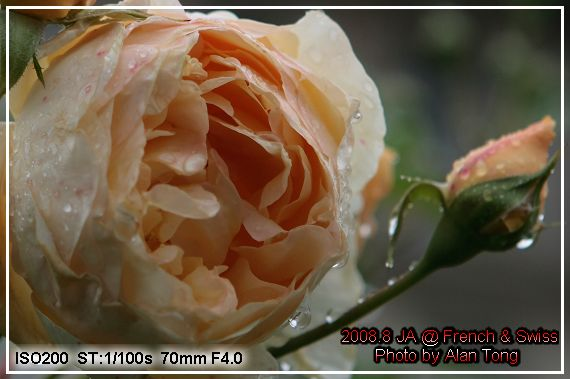IMG_6598C.jpg