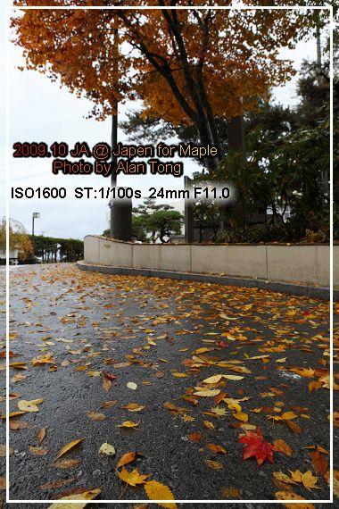 IMG_4221.jpg