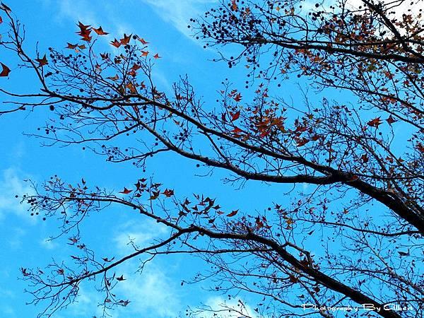2012-01-09_11.02.59.jpg