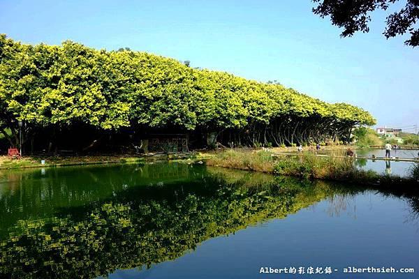 【黃金榕】桃園市.內壢釣魚池