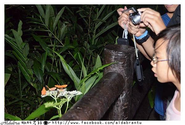 夜間蛾類觀察