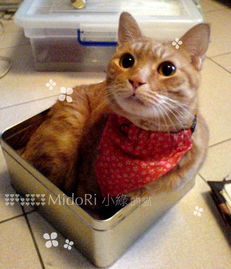紅領巾培培