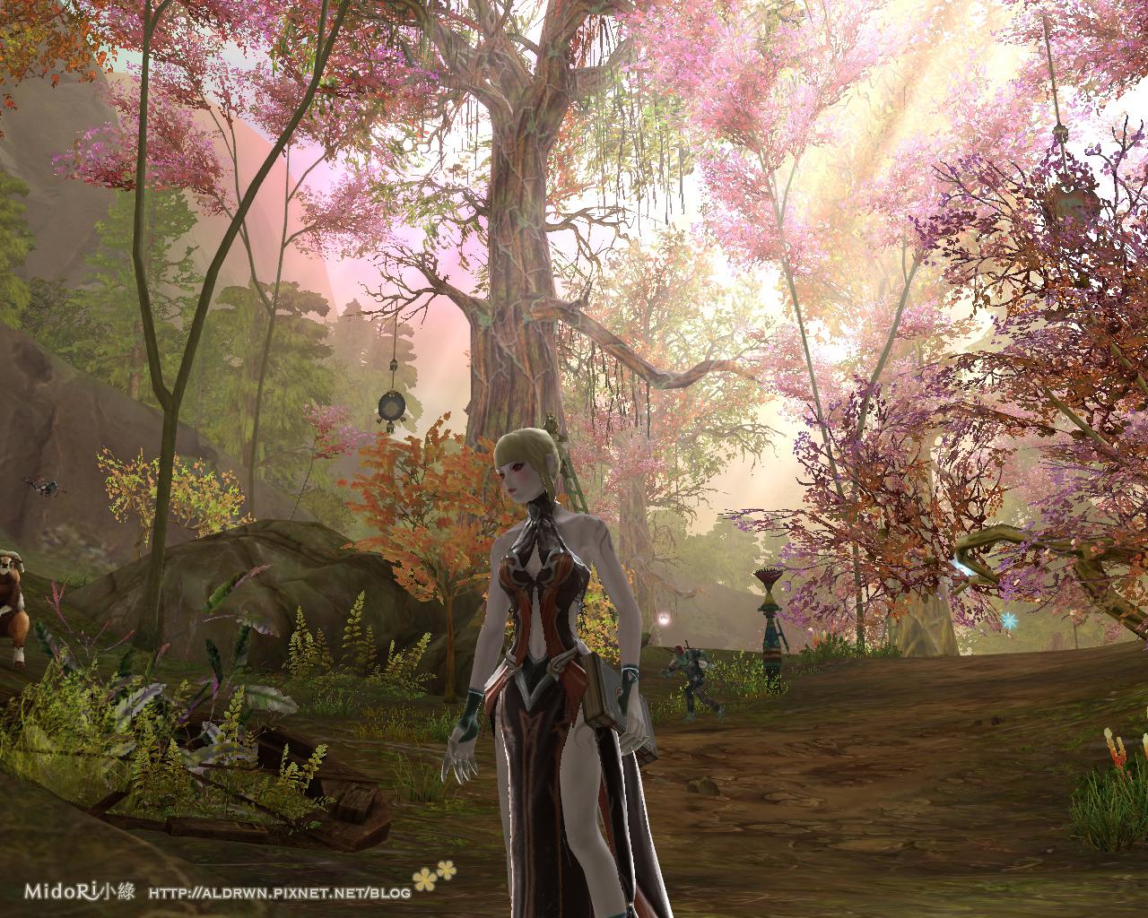 魔族-超美櫻花樹林2.jpg