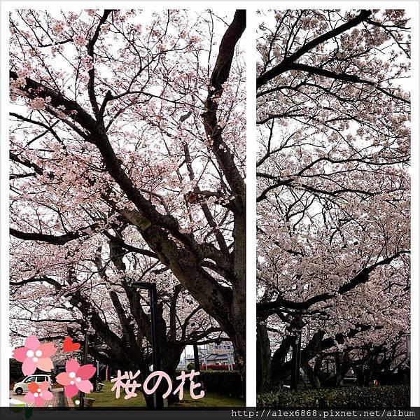 2013-03-31-11-04-02_deco