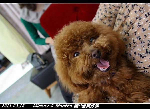 2011-03-13_172愛情萬歲.jpg