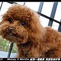 2011-03-13_204台南夕遊出張所.jpg