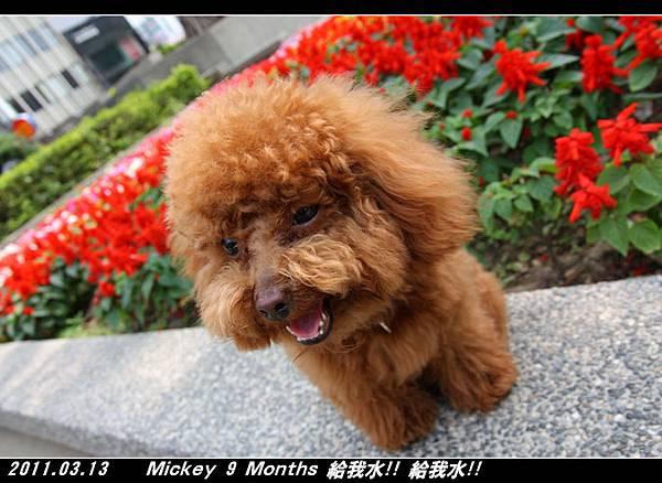 2011-03-14_048台南孔廟旁公園.jpg
