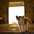 小貓2.jpg