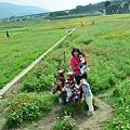 2011 1114 杭菊 002.jpg