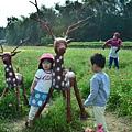 2011 1114 杭菊 003.jpg