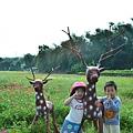 2011 1114 杭菊 005.jpg