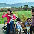 2011 1114 杭菊 007.jpg