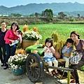 2011 1114 杭菊 009.jpg